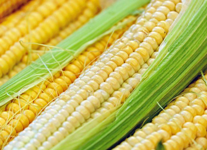 csemege kukorica főzése